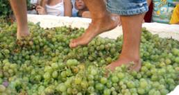 manilva druiven trappen uai